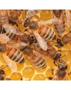 Kleine Bienenpatenschaft