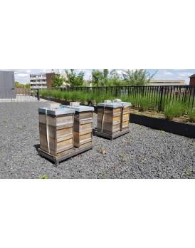 Bienenvölker mieten